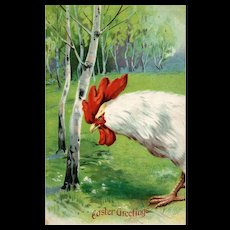 Fabulous large head Easter Rooster Birch Trees vintage Postcard