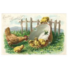 Raphael Tuck Chicks Sitting In Water Bucket As Mother Hen Watches Over Easter Postcard