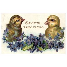 1908 Two large chicks with violet flowers Vintage Easter Postcard