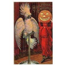 A Halloween Greeting Pumpkin Jack O Lantern head Scares a Parrot Vintage postcard