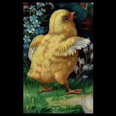 Vintage Easter yellow baby chick postcard Series 1520b