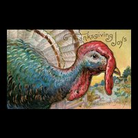 Black Friday - An American Beauty Large Closeup Turkey Thanksgiving Joy Series 4 vintage Postcard