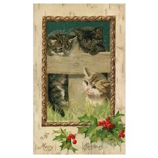 1907 A Merry Christmas Cat kitten greeting John Winsch vintage postcard