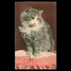 Alfred Mainzer classy green eyed grey cat vintage postcard