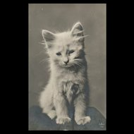Real Photo White Kitten Cat vintage postcard