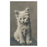 Real Photo White Kitten Cat vintage postcard