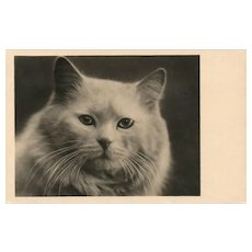 Captivating Closeup view of a white cat vintage postcard