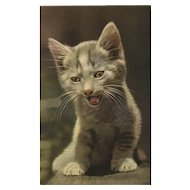 """""""I got something to say - MEOW"""" Alfred Mainzer #335 Vintage Cat Kitten Postcard"""