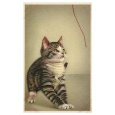 Alfred Mainzer #324 Kitten Cat hypnotized by string vintage postcard