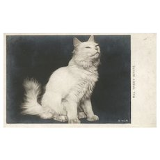 Early Mrs. Tabby White Real Photo vintage postcard Rotograph Co