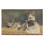 It's a family affair momma cat and her 3 kittens Alfred Mainzer #344 Vintage postcard
