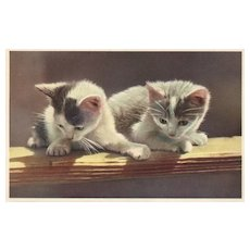 Alfred Mainzer  #333 Two kittens on a ledge looking down vintage postcard