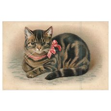 Gorgeous AMB Cat wearing a ribbon embossed vintage Postcard
