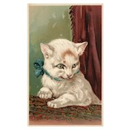 Rare PFB #5951 White Cat Kitten vintage Postcard