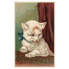 Rare PFB #5951 White Cat Kitten vintage Postcard