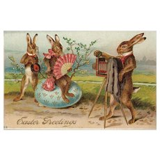 Fantastic Easter Bunny Rabbits Pose for a Photographer
