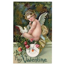 Cupid sits with a White Dove and a target roses Vintage Valentine postcard