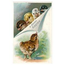 Raphael Tuck Easter Series 700 One chick observes 4 vintage postcard