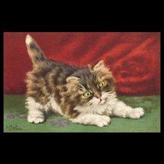 D Merlin Artist Signed Vintage cat postcard Red backdrop