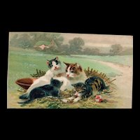 Lovely Early 1900's vintage Mother Cat with kittens Postcard 7768