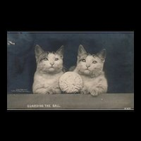 TWINS!  1905 Real Photo Guarding the Ball Rotograph Vintage Cat Kitten Postcard
