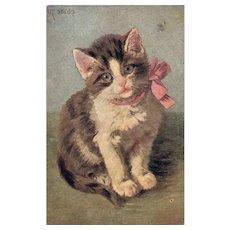 Artist Signed M Stacks Cat Kitten Series 327 vintage postcard