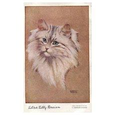 Artist Signed G Vernon Stokes  Silver Tabby Persian Cat Kitten vintage Postcard