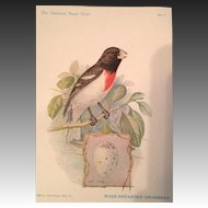 The American Singer Series.  No.1 Rose Breasted  Grosbeak