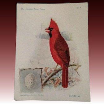 The American Singer Series No 7 Cardinal