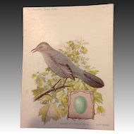 The American Singer Series No 11 Cat Bird
