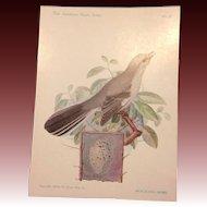 The American Singers Series No 12 Mockingbird