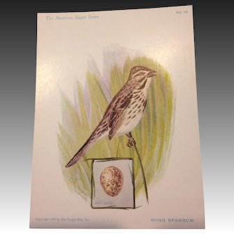 The American Singers Series No 14 Song Sparrow