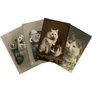 4 Real Photo Postcards of Cats and Kittens Unused