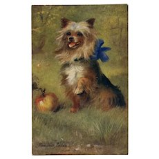 Yorkshire Terrier Raphael Tuck Oilette Pet Dog Series Unused Antique Postcard