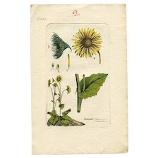 Lithographic Botanical Print Two Pages from Antique French Books