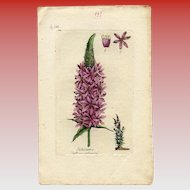 Lithographic Botanical Print of Purple Loosestrife and Text Page from Antique French Books
