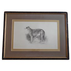 Russian Artist Martynow Lithograph of Tsar's Borzoi Wolfhound Dog Original Frame