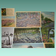 Vintage Post Card Collection from Florida