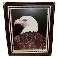 Vintage Hand Crafted Framed American Bald Eagle Picture