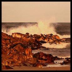 Erick Ingraham Oil Painting Seascape Seapoint Surf