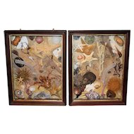 Pair of 20th c Sea Life Dioramas or Shadow Boxes