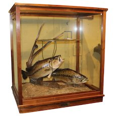 Custom  Wood & Glass Fishing Diorama with Pair of Largemouth Bass