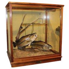 Custom  Wood & Glass Fishing Diorama with Pair of Largemouth Bass