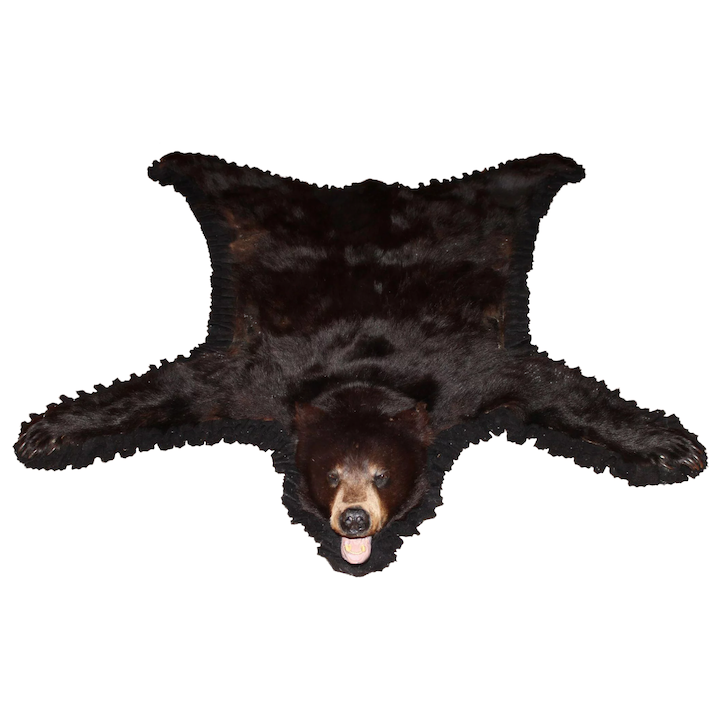 7f8d59ebb1027 20th Century American or Canadian Black Bear Skin Rug   New ...