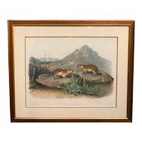John James Audubon Hand Colored Lithograph, California Marmot Squirrel 1847