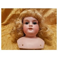 Antique  Bisque Armand Marseille Doll Head