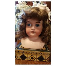 Antique Armand Marseille Doll Head with Fur Eyebrows