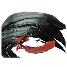 Grouping Vintage Feathers Black Ostrich Coq for Hats and Display
