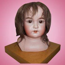 Large Bisque Brown Sleep Eye German Doll Head