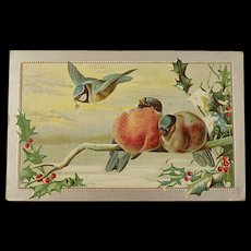 Victorian/Edwardian Christmas Postcard With Birds